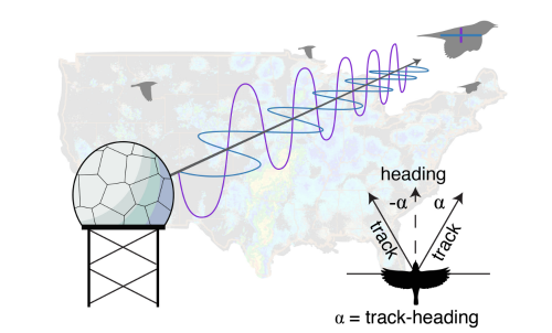 The United States upgraded the NEXRAD network to dual-polarization in 2013, providing new radar products for the description of migrant flight strategies.