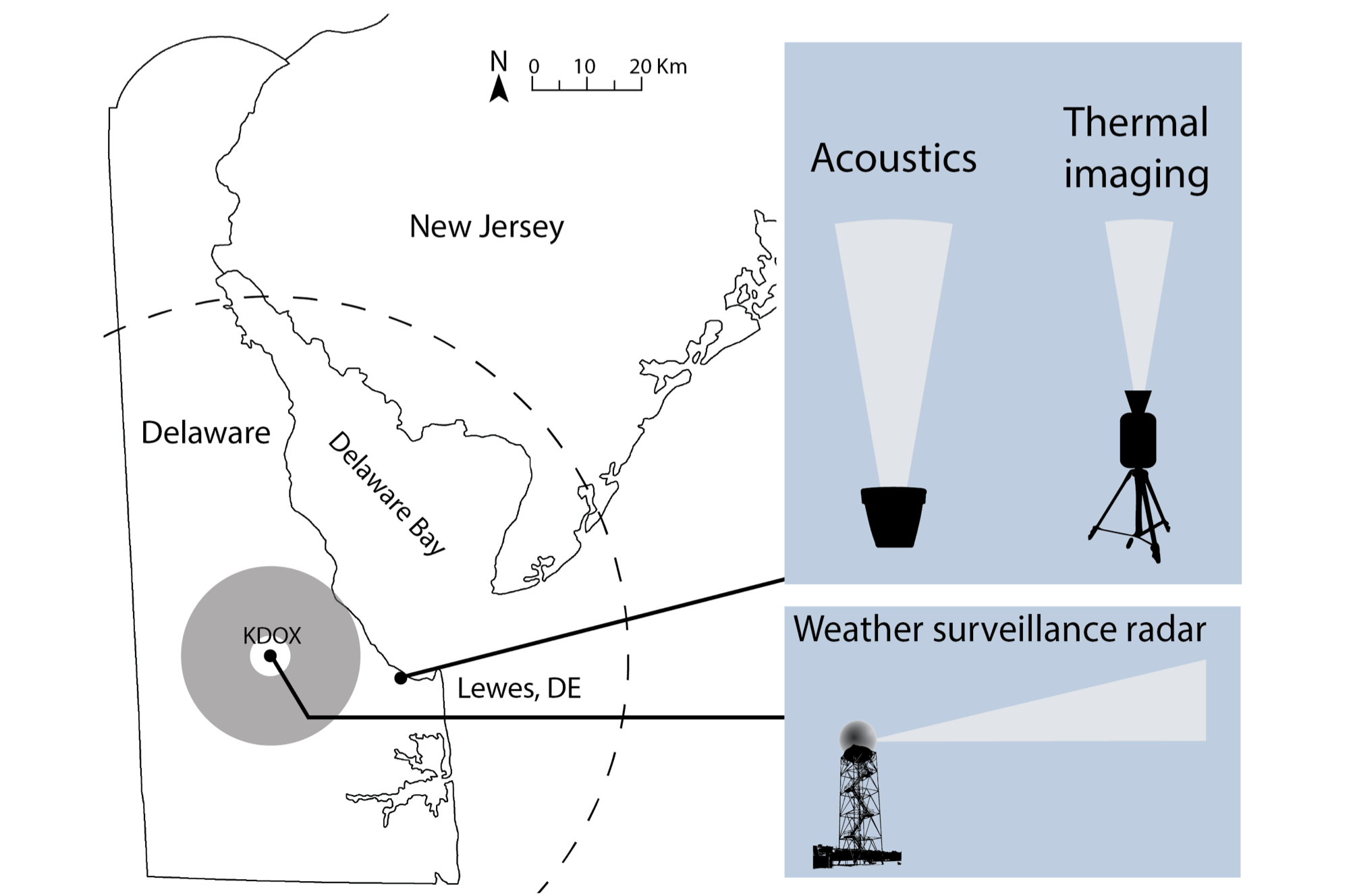 Locations of the study site in Lewes, Delaware, USA, where thermal infrared camera and acoustic recordings were made of nocturnal flying animals, and of the KDOX radar station. The gray circle denotes the 5–20 km radius area where radar data were used to calculate vertical profiles of reflectivity (VPR).