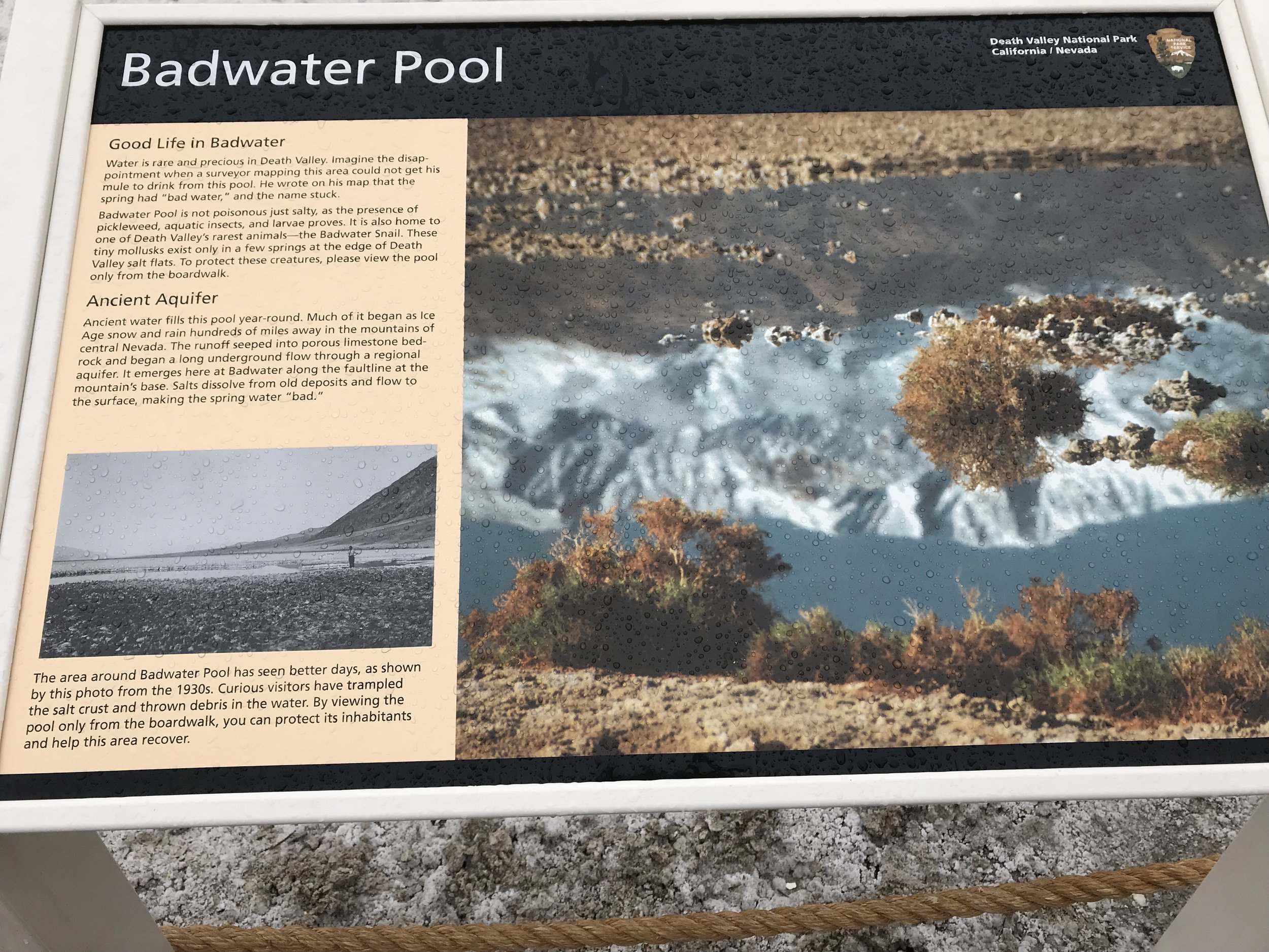Badwater Pool Informational Sign  Badwater Basin, Death Valley National Park, Photo By: Nichole McDaniel
