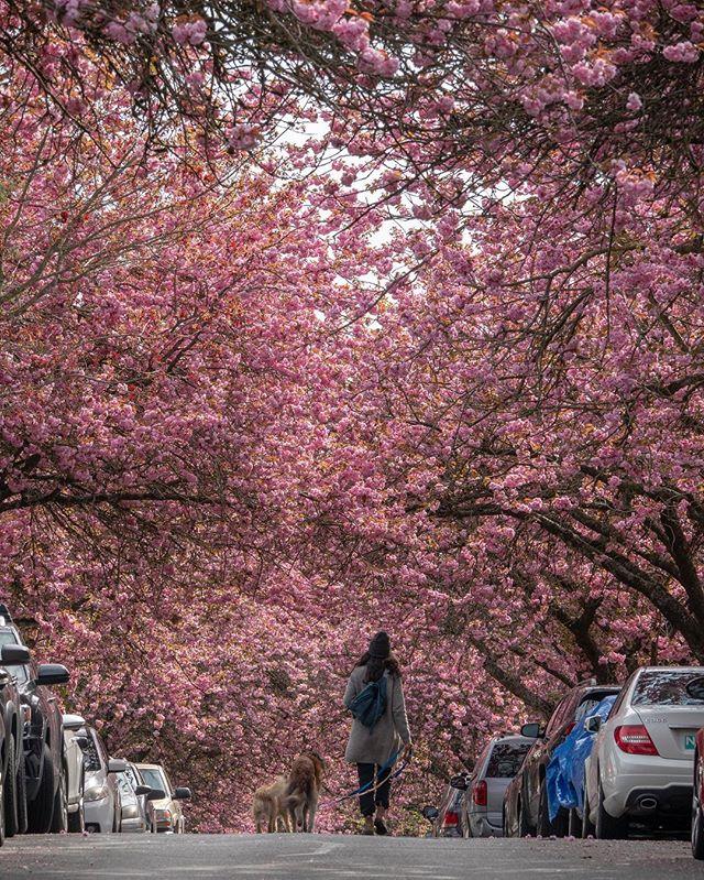 Annual 桜 family photo