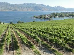 kelowna vineyard.jpg