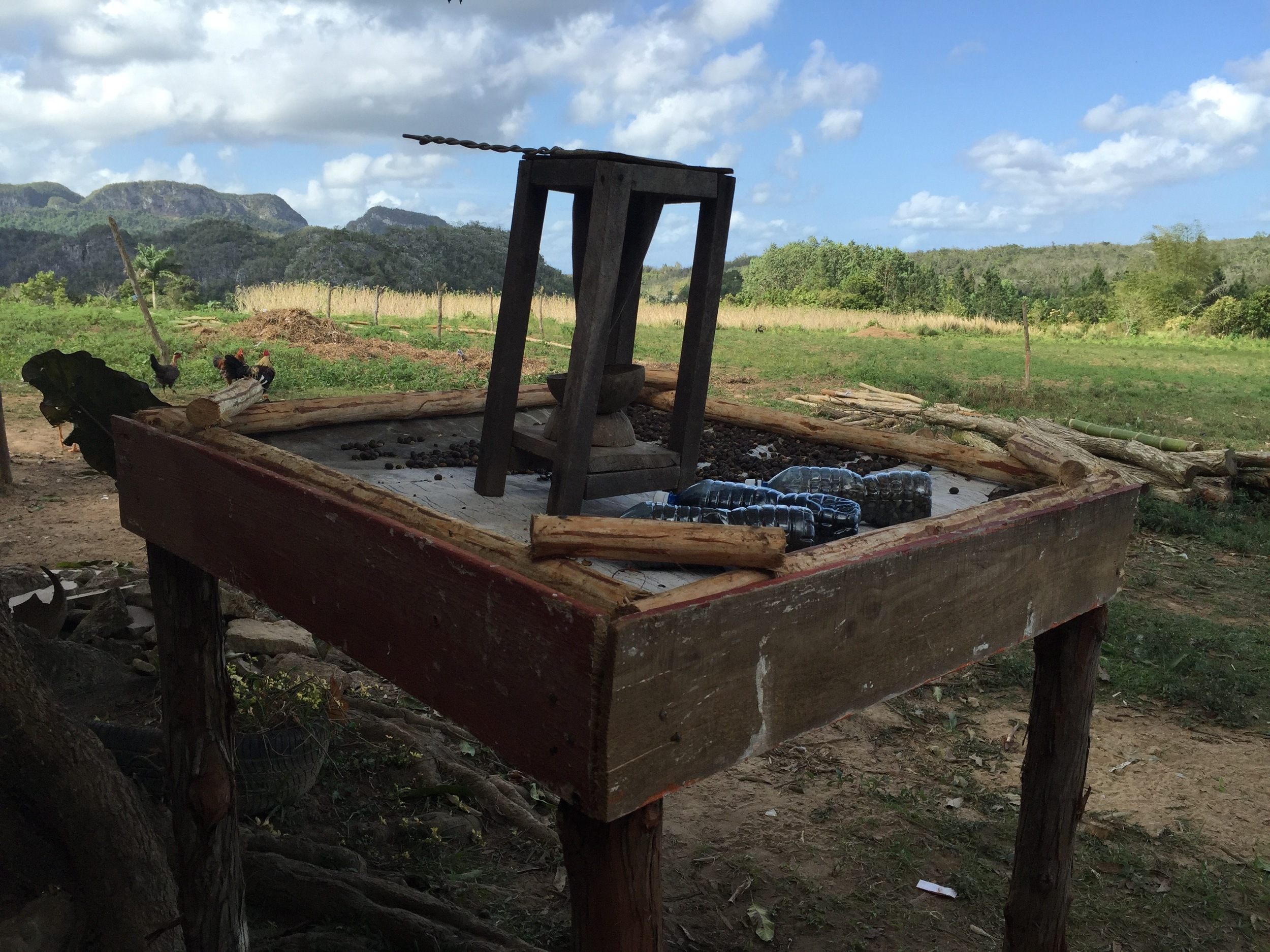 A cafetera (coffee pot) atop a drying stand on a Viñales coffee farm. Within a UNESCO World Heritage site, this farm is prohibited from using any machines or chemicals to grow and produce their coffee.