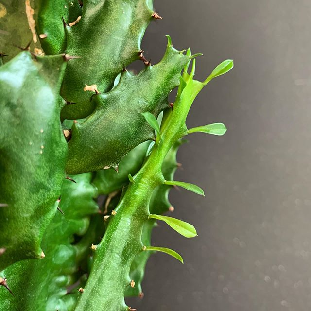 Find beauty everywhere (even between the spikes)! What draws you in?  #thedetails #clutch #itseverywhere #betweenthelines #clutchhairco #cactus #modernsalon #workhere #hoodriver #hoodriversalon #hoodriverhair #pnwhairstylist #pnwwonderland #columbiagorge #gorgeous #hood #hoodie #thedalles #wasco #oregon #portlandhair #goldwellcolor #oribeobsessed #randcolove #behindthechair #blondes #beachhair