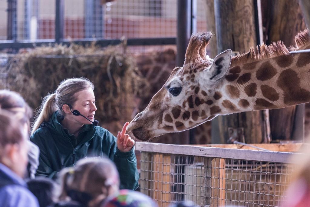 Marwell Giraffe and HW Jason Brown.jpg
