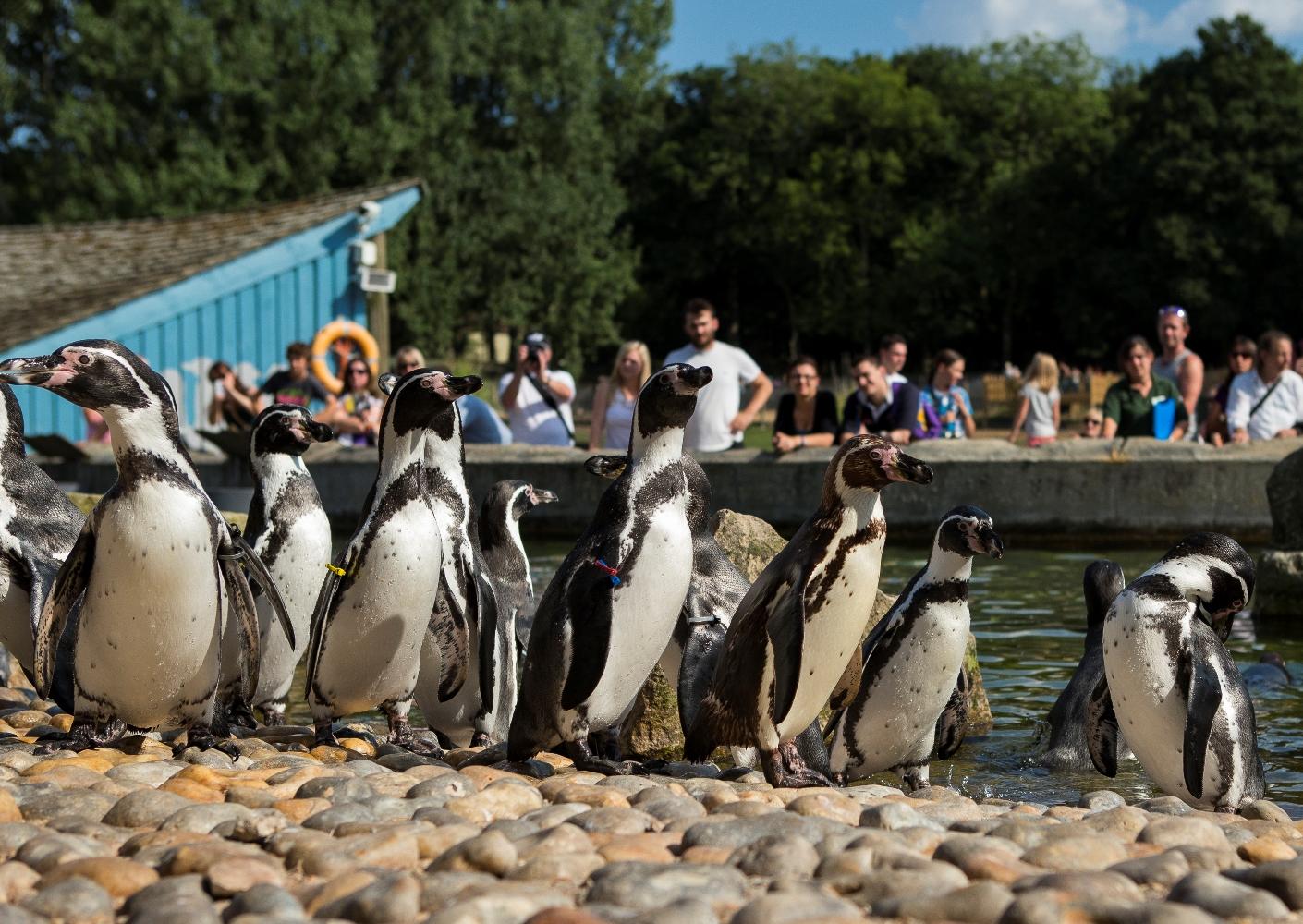 Marwell Penguins Jason Brown (1).jpg