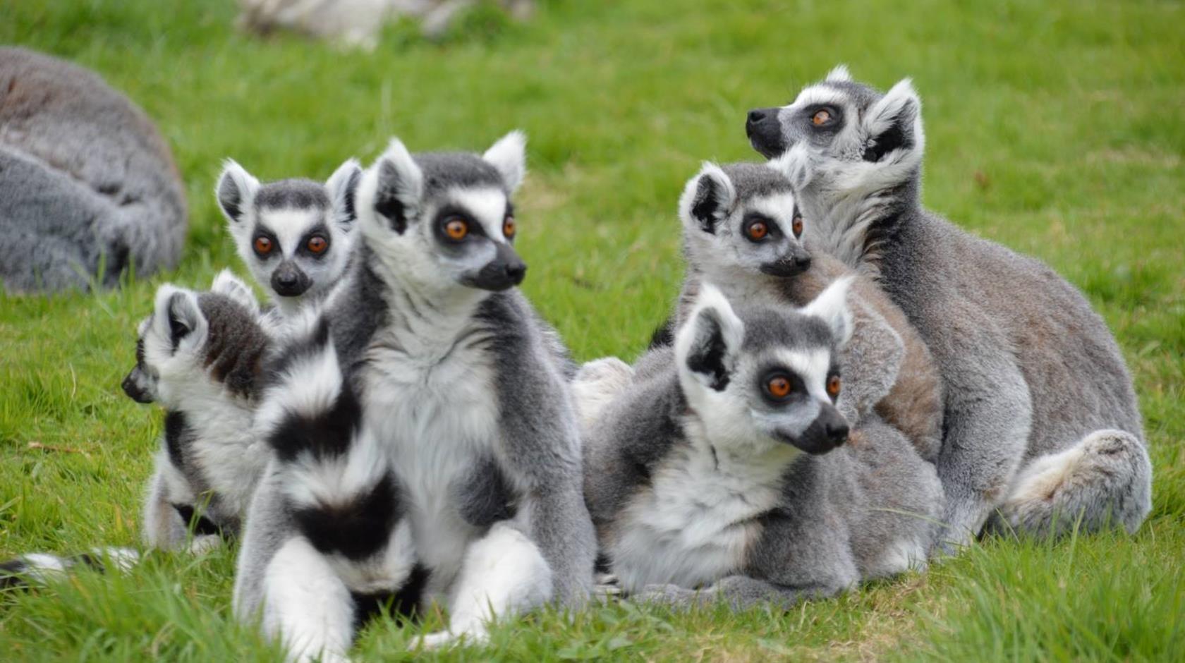 34423-wingham-wildlife-park-canterbury-08.jpg
