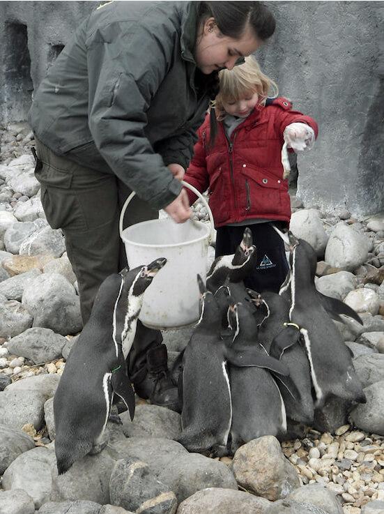 Wingham-Penguin-Experience.jpg