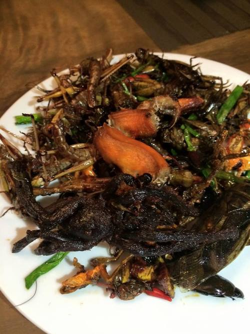 A plate full of hoppers, crickets, tarantula, snake, and frogs.