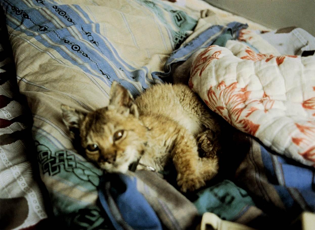 a very sick cub