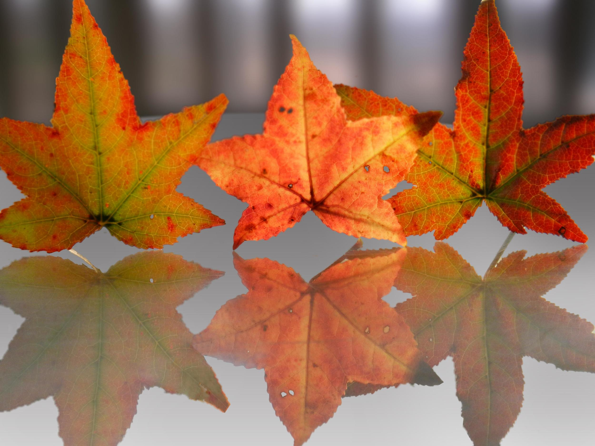 fall-leaves-close-up