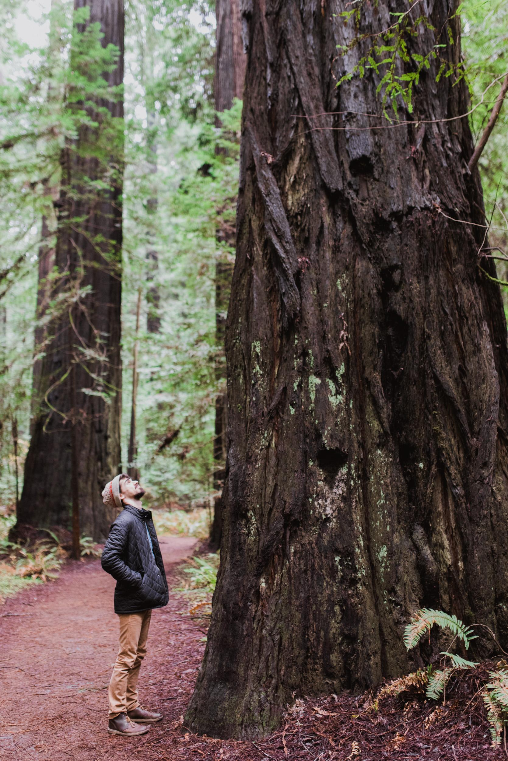 redwood portrait photographer