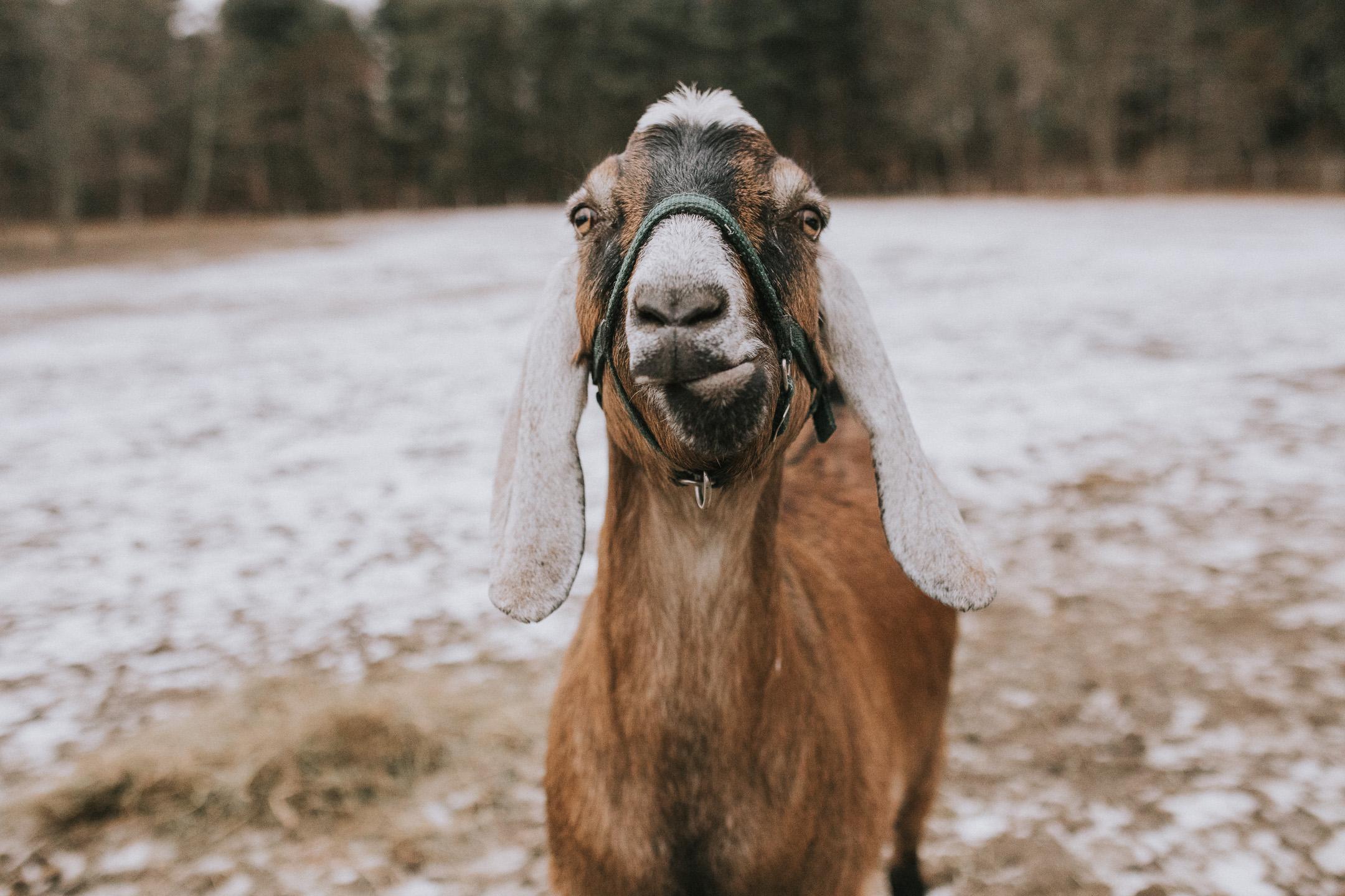 thurmont wedding photographer (9 of 9).jpg