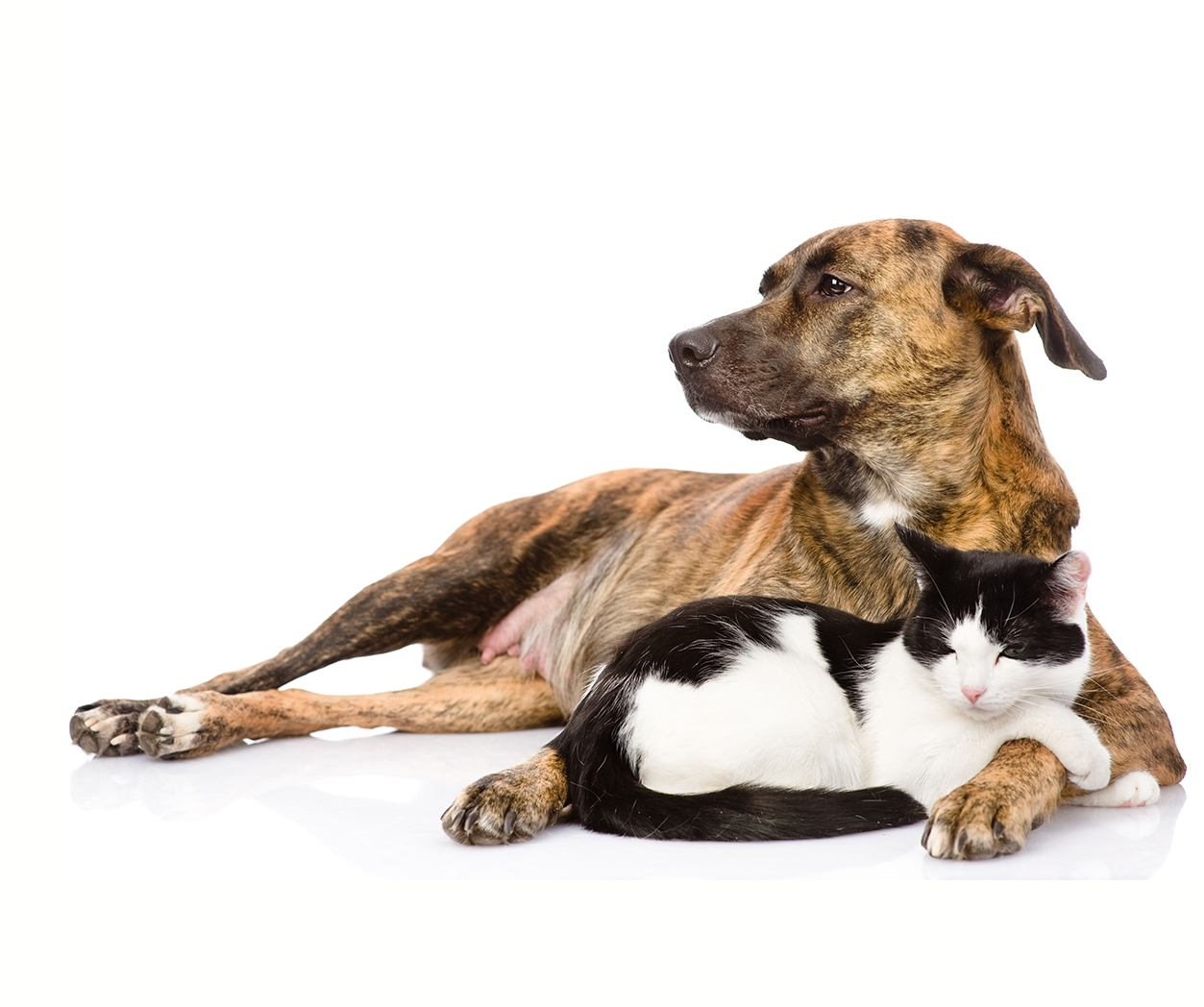How Massage Benefits Your Pet  Improves mobility and flexibility.  Reduces inflammation. Provides pain relief and muscle relaxation.  Minimizes stress and decreases anxiety. Speeds recovery time from injury or surgery.  Maintains muscle tone and healthy function.  Promotes the body's natural healing process.  Builds confidence and trust.