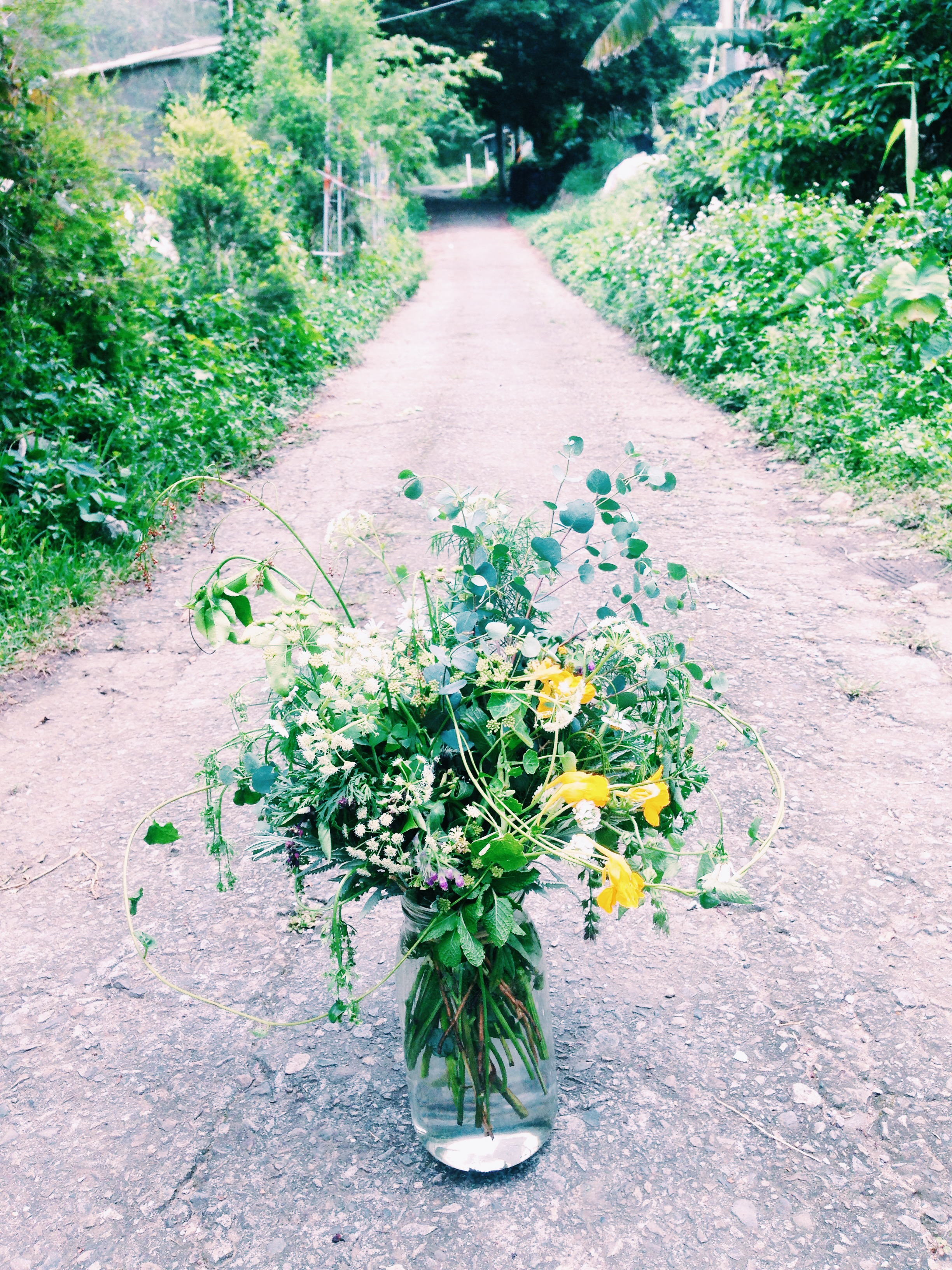 Make a bouquet with plants in the mountain -