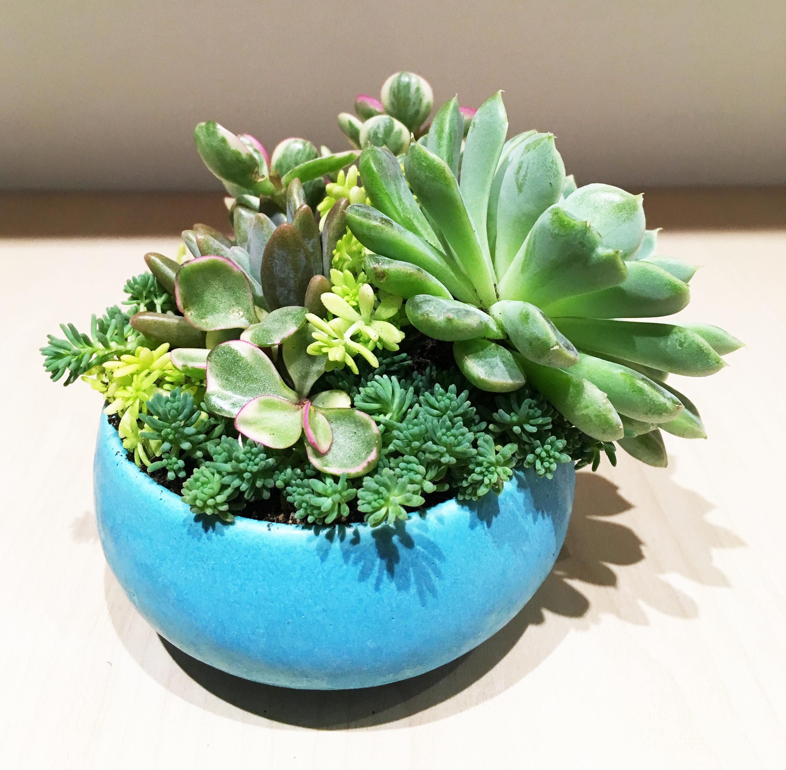 Succulent bowl -