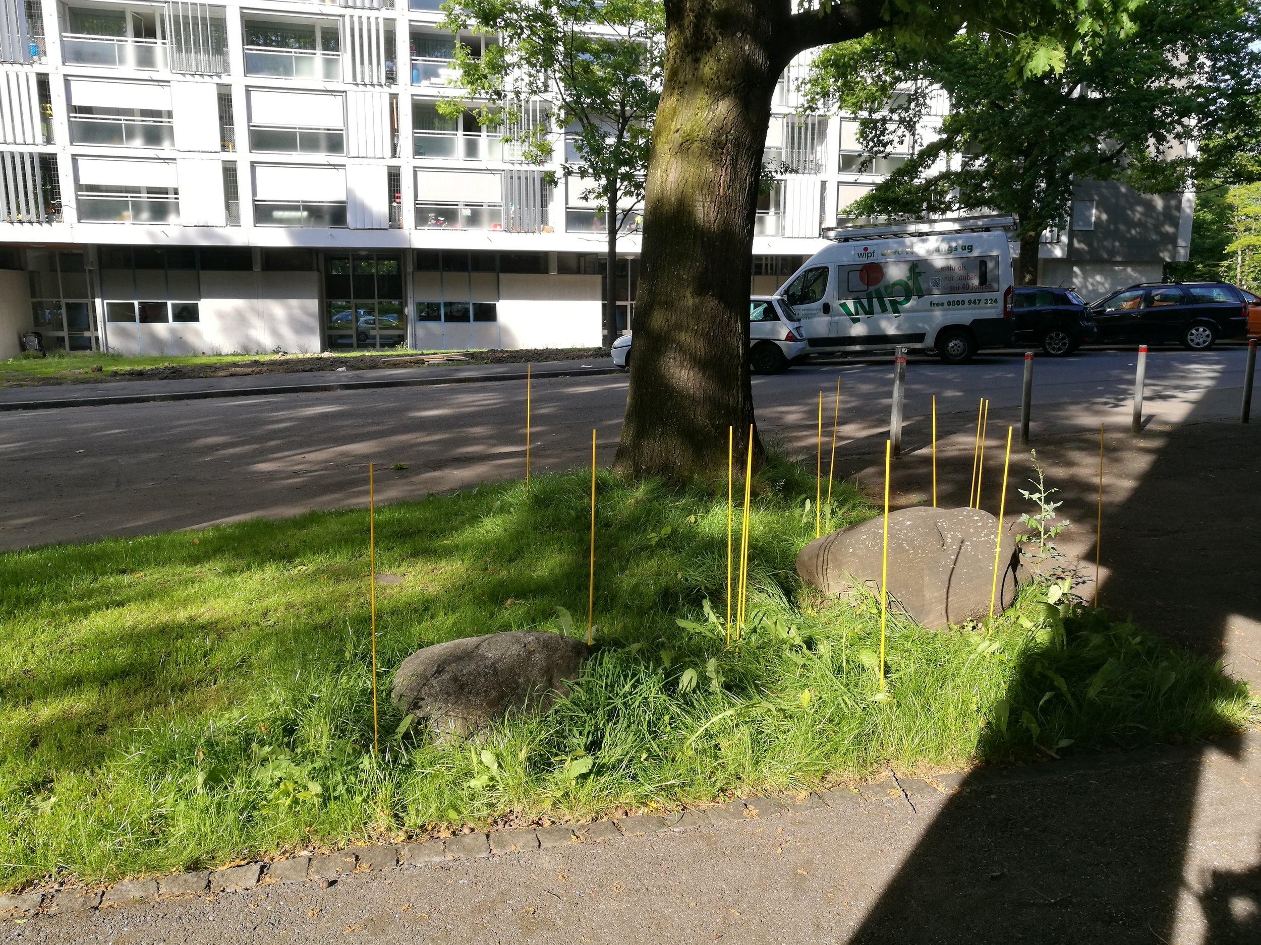 rosemary-niehaus-taraxacum-sticks2.jpg