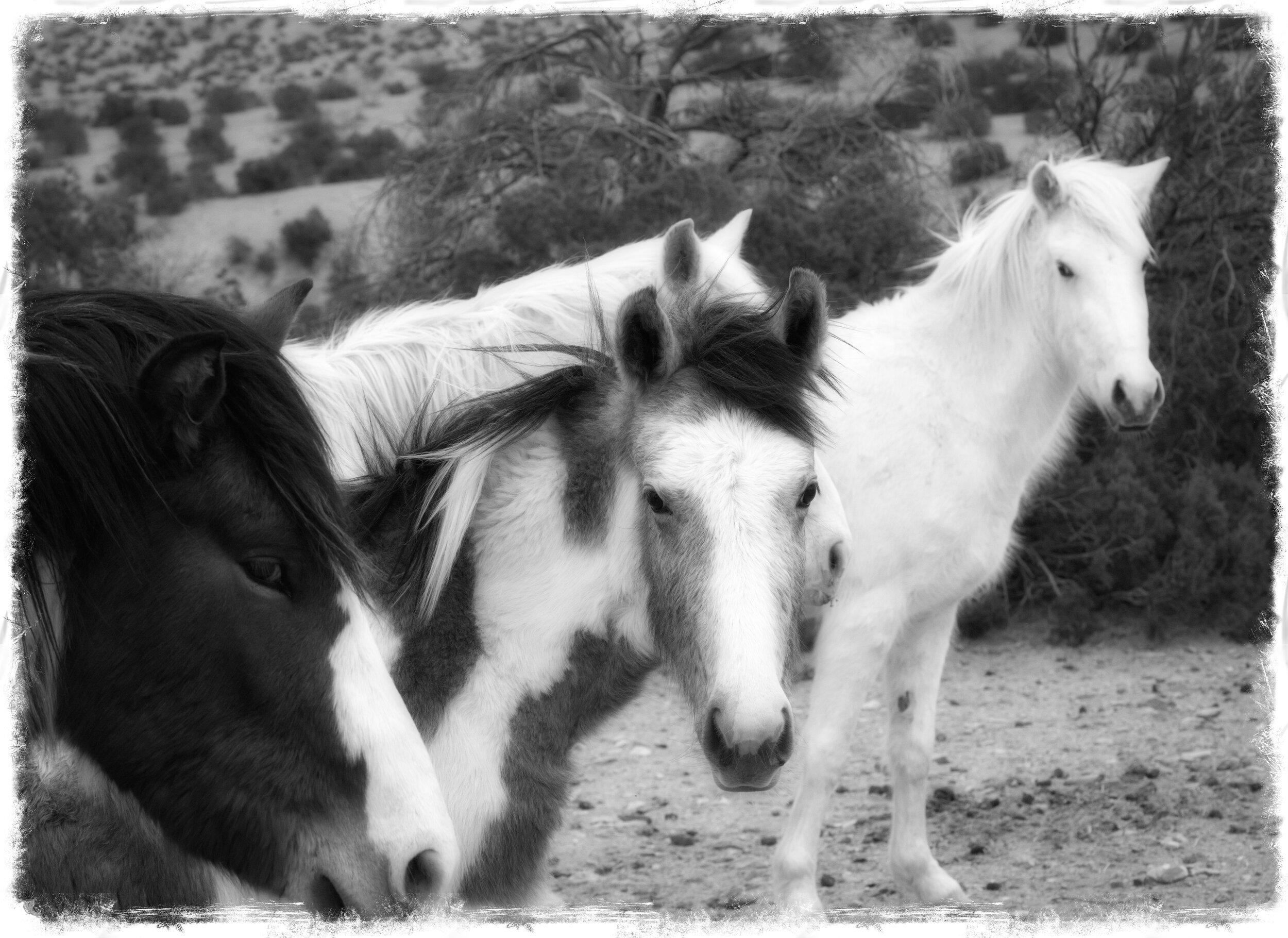 Black And White Wild Horse Photos John Boland Photography