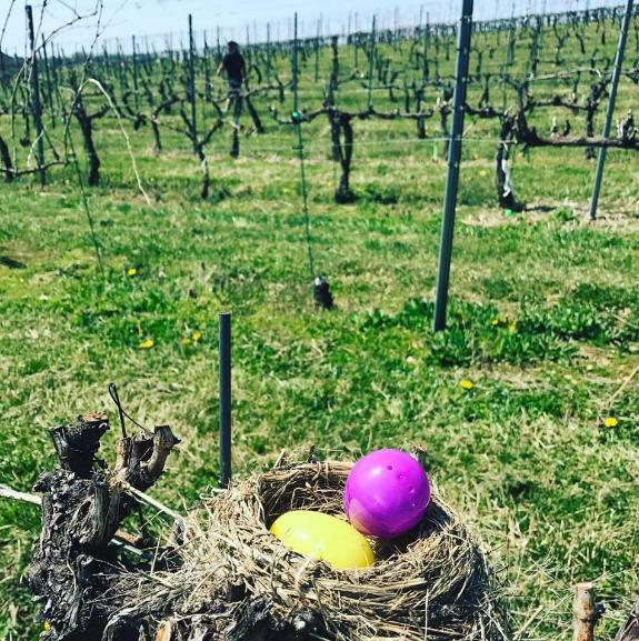Fero Easter Egg Hunt.png