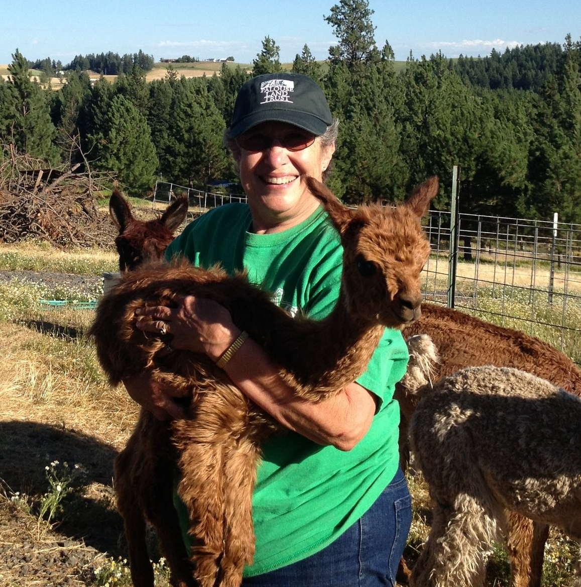 Judy Lalonde and her alpacas