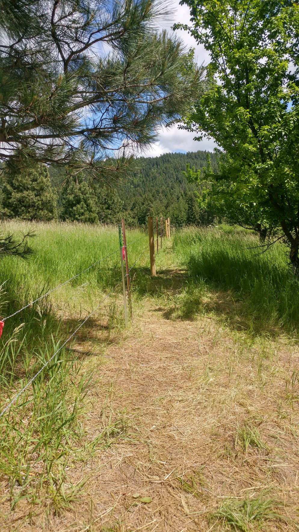 Wildlife-friendly fencing installed across the northern edge of the meadow.