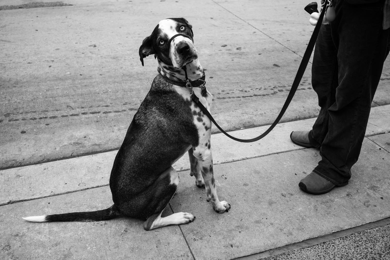 Dogs-5.jpg