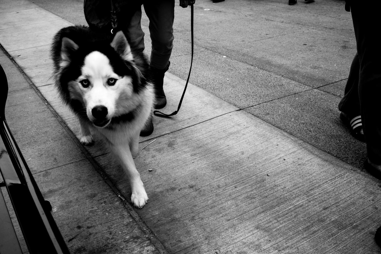 Dogs-7.jpg