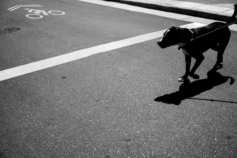 Dogs-10.jpg