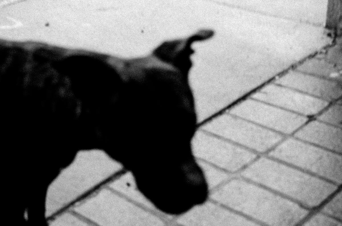 Web Dogs-1.jpg