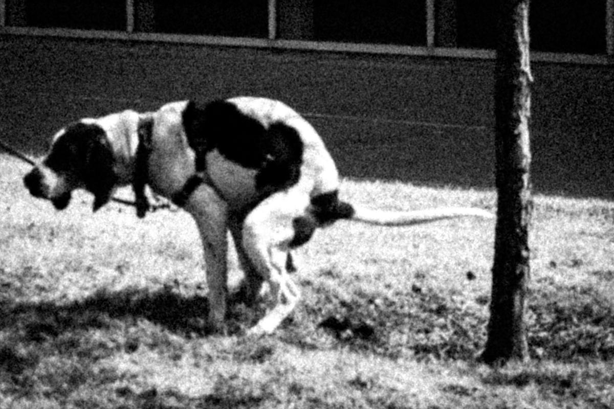 Web Dogs-2.jpg