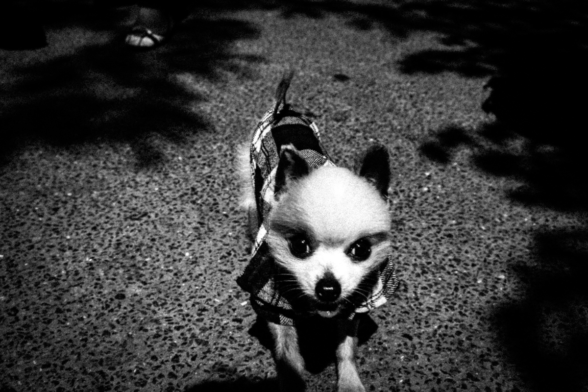 Web Dogs-4.jpg