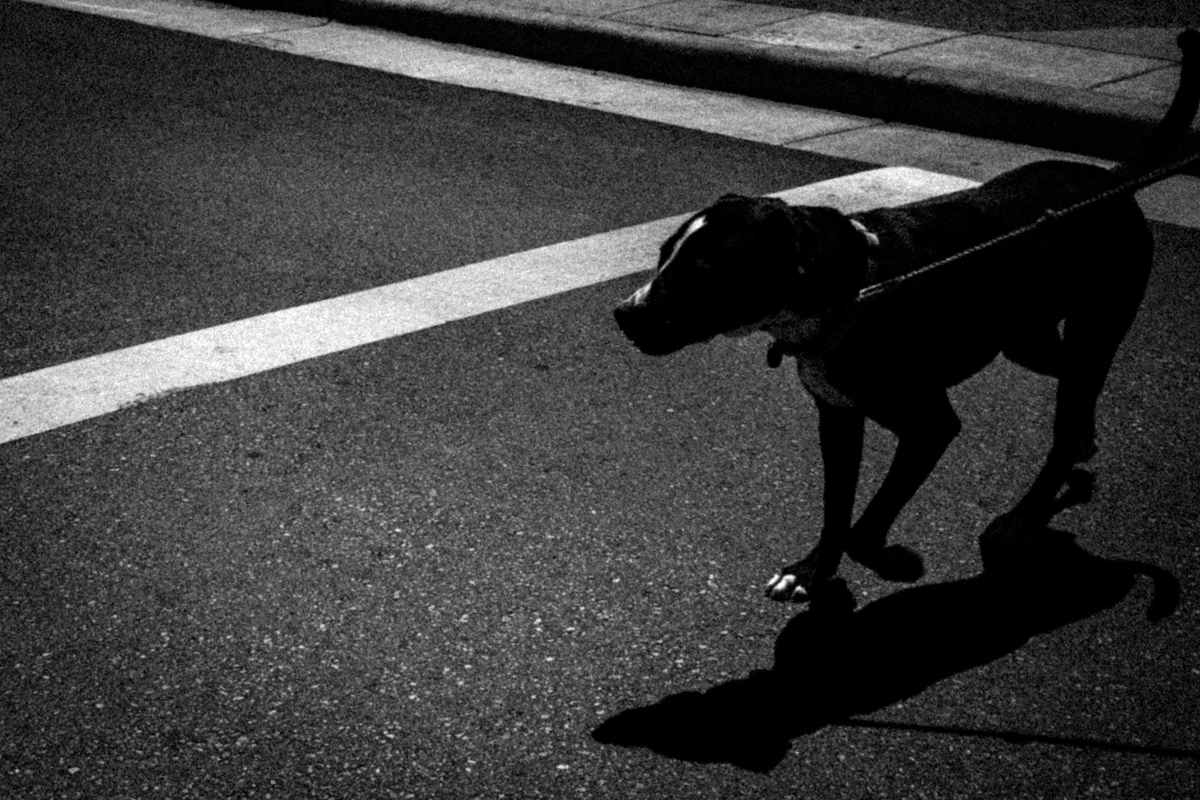 Web Dogs-5.jpg