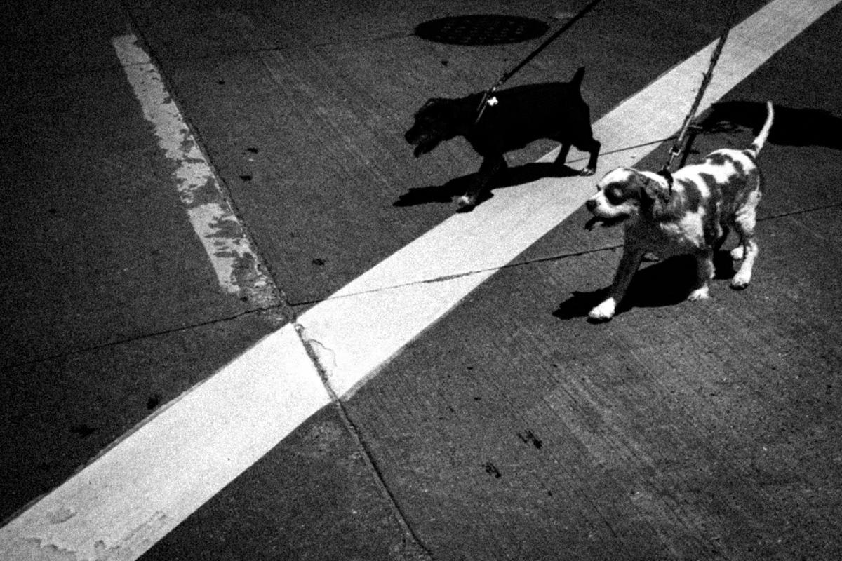 Web Dogs-6.jpg