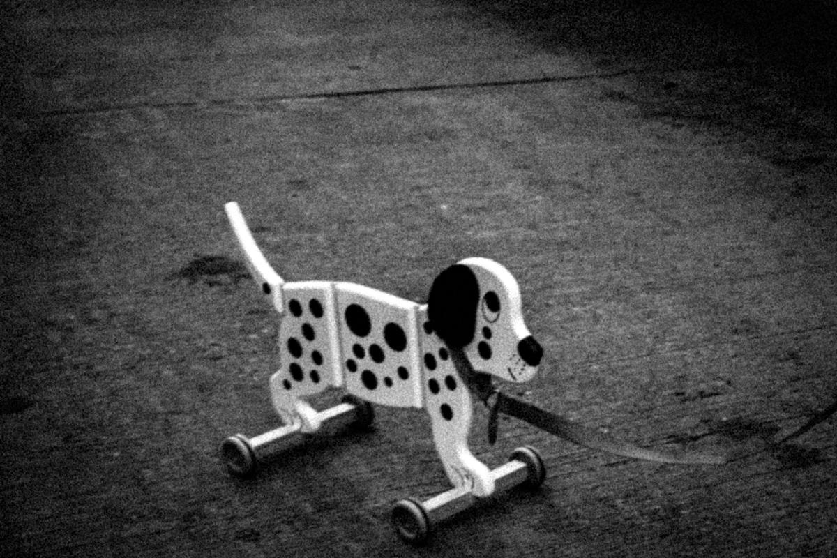 Web Dogs-9.jpg