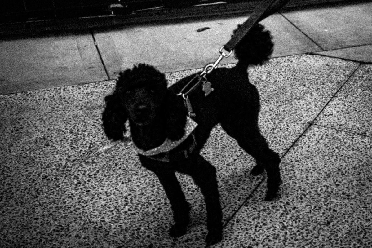 Web Dogs-11.jpg