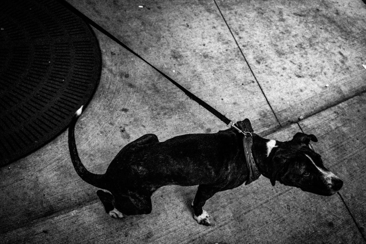 Web Dogs-13.jpg