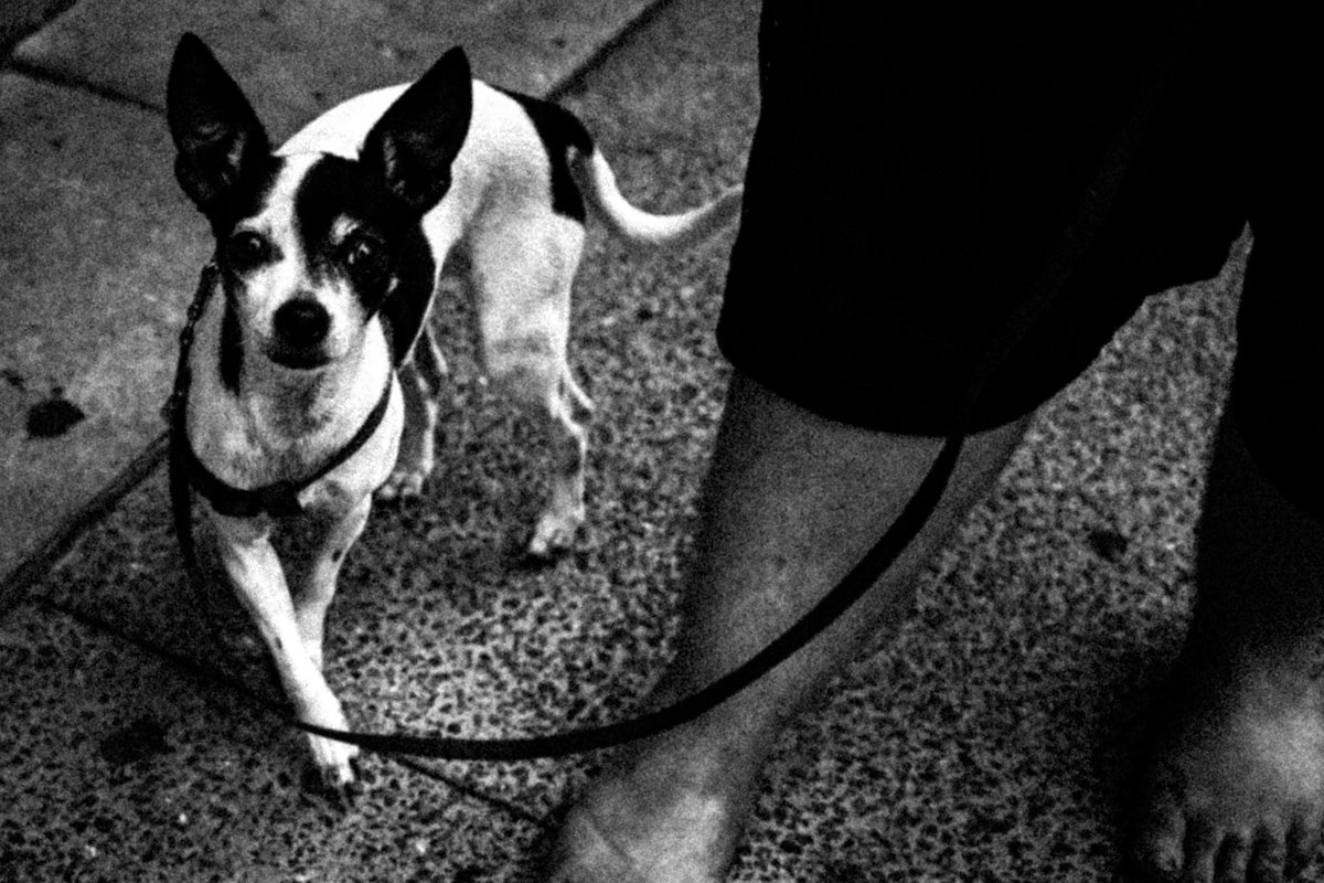 Web Dogs-14.jpg