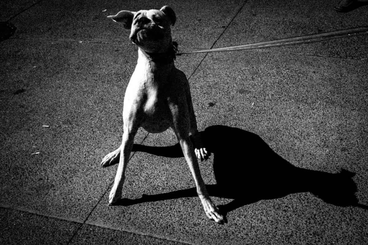 Web Dogs-19.jpg