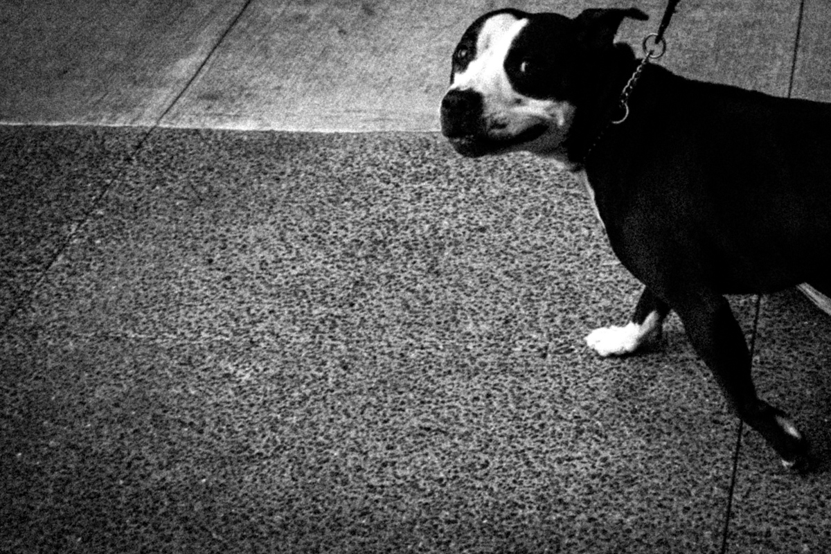 Web Dogs-21.jpg