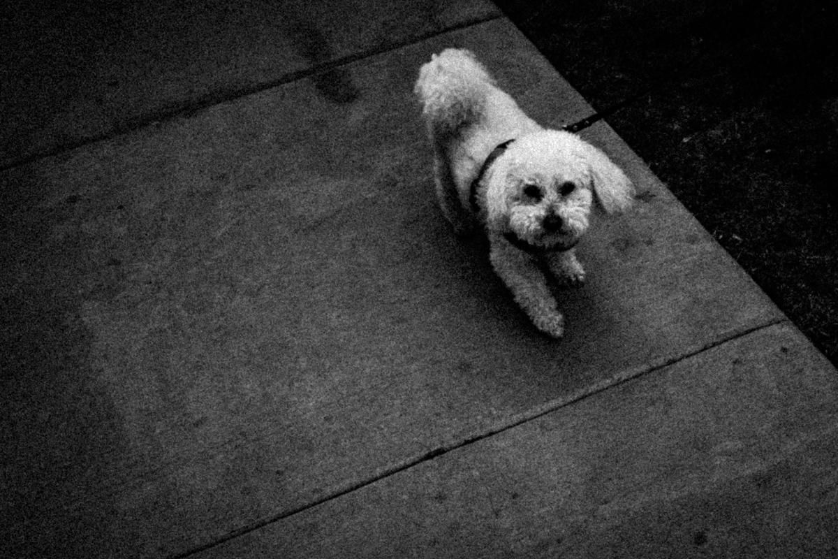 Web Dogs-23.jpg