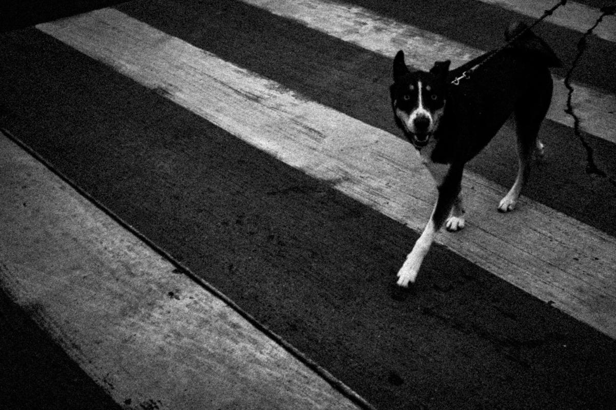 Web Dogs-24.jpg