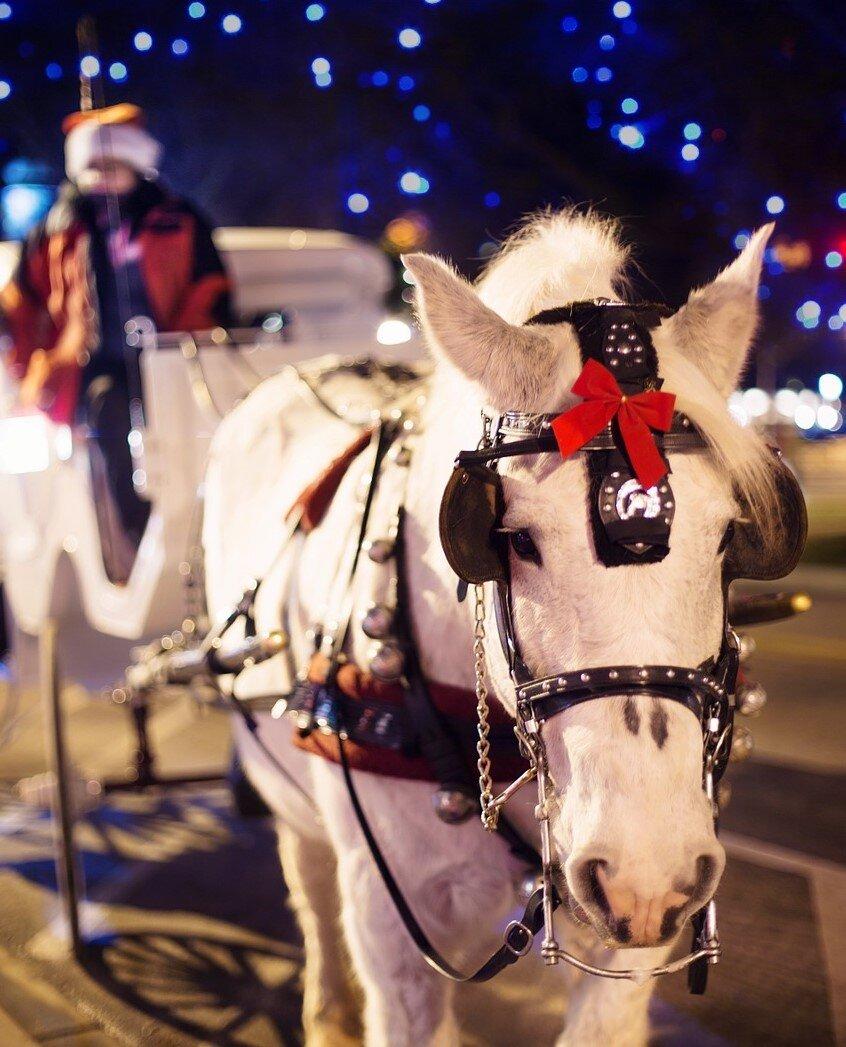 Carriage Rides White Horse Inn