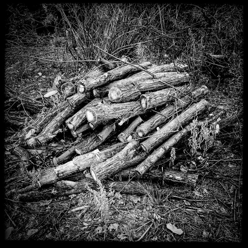 BosqueBlogPost-15.jpg
