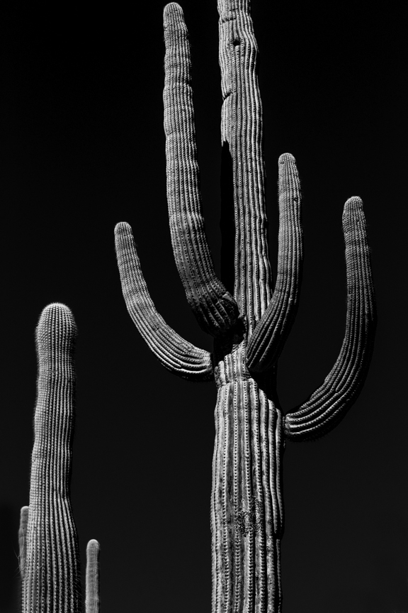 CactusSentinels-3.jpg