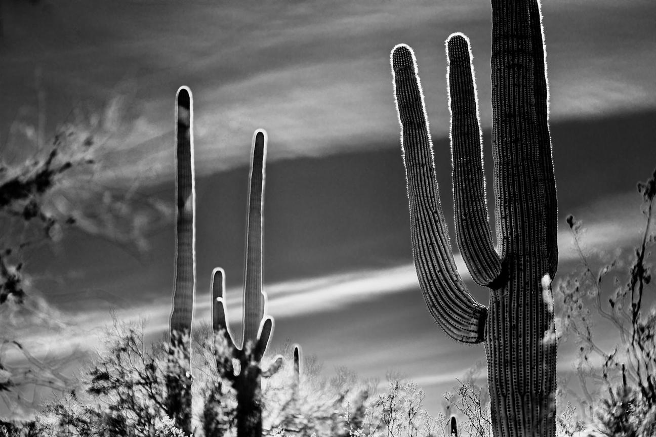 CactusSentinels-8.jpg
