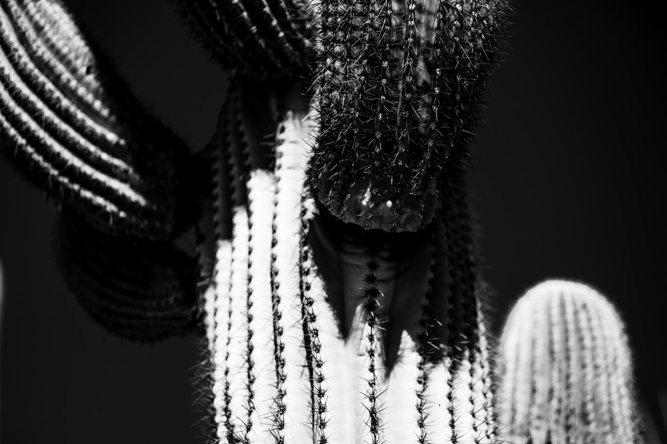 CactusSentinels-9.jpg