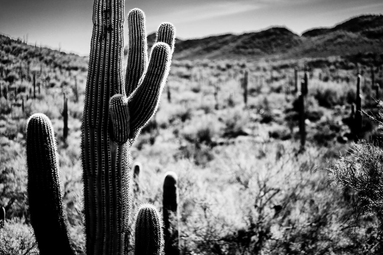 CactusSentinels-10.jpg