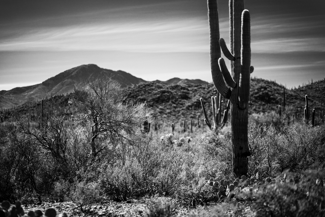 CactusSentinels-12.jpg