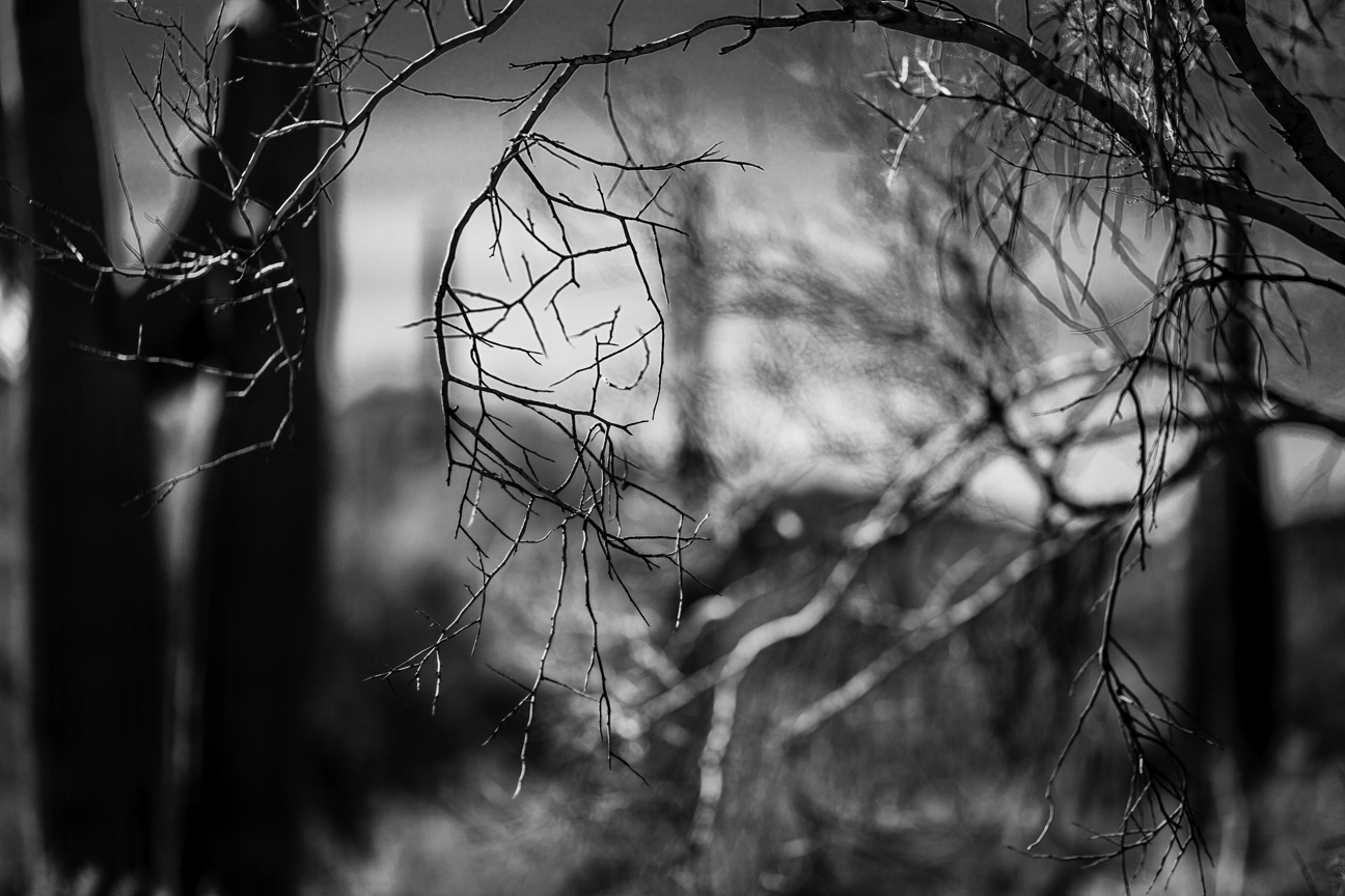 CactusSentinels-14.jpg