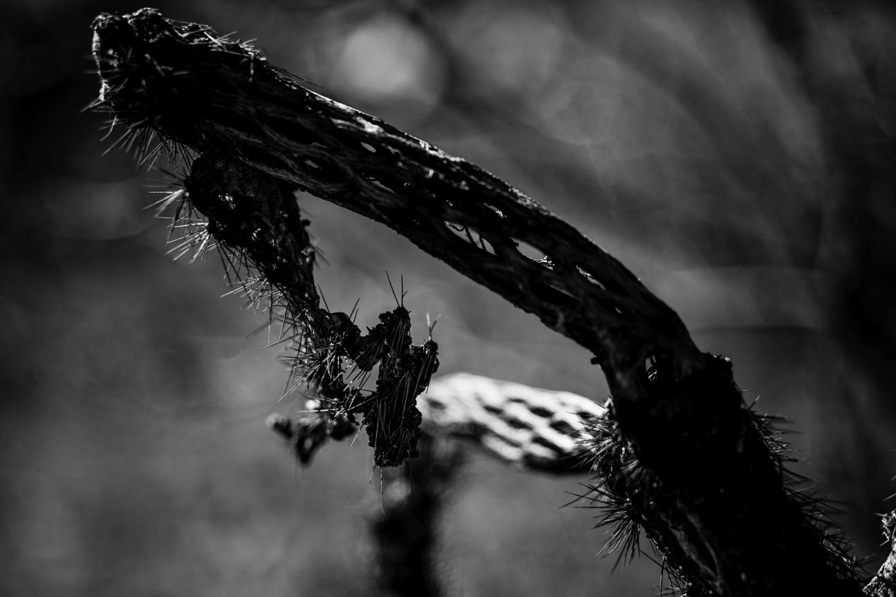 CactusSentinels-15.jpg