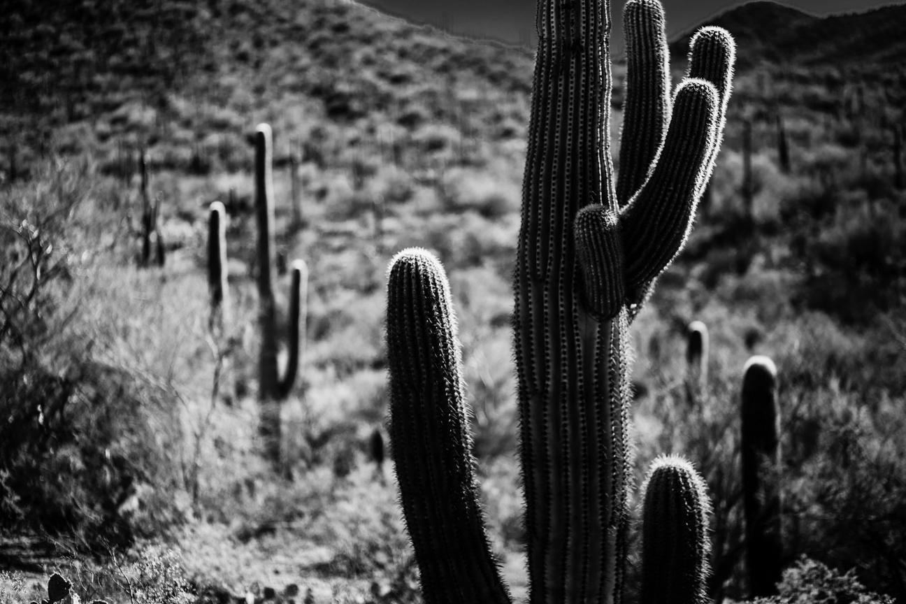 CactusSentinels-21.jpg